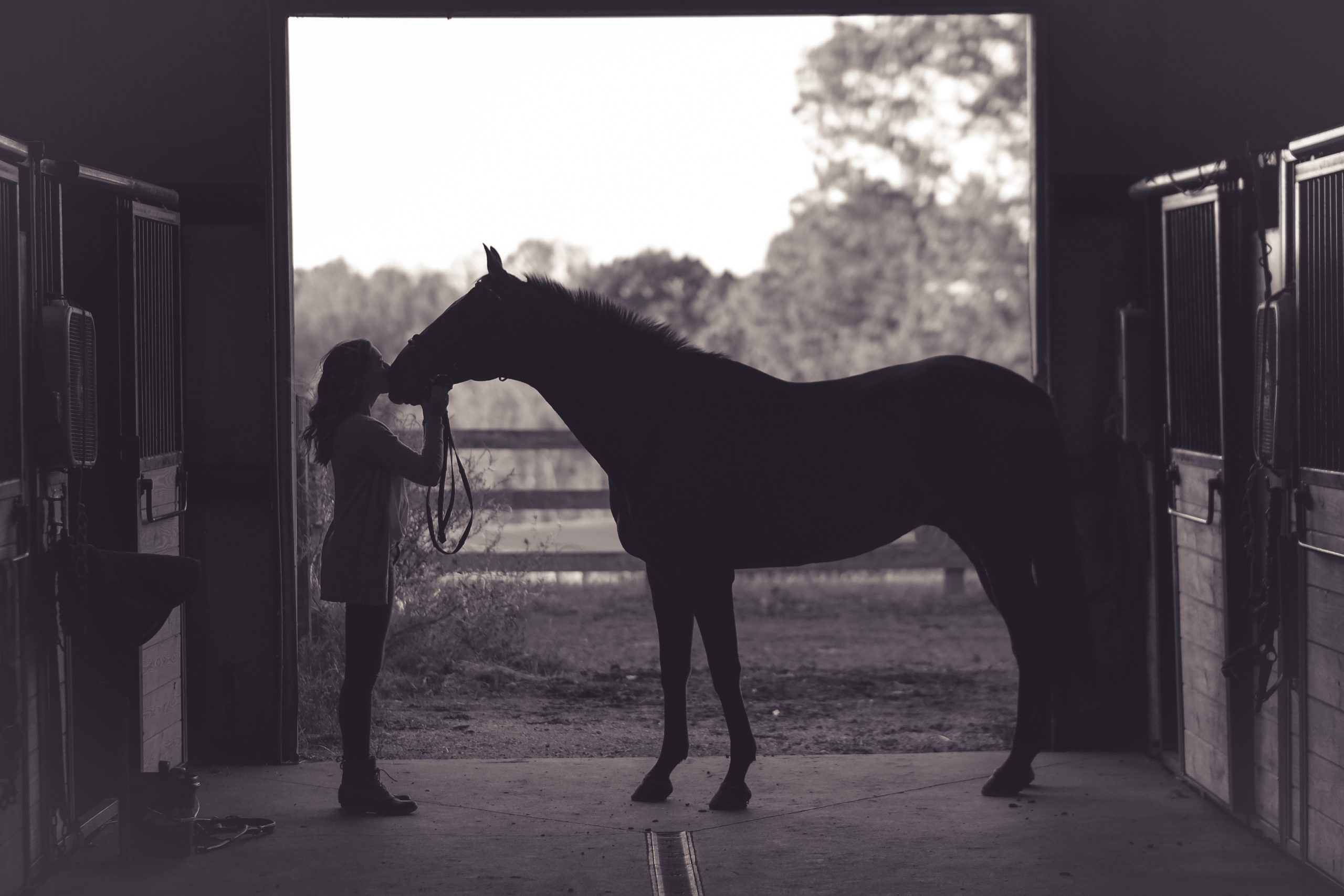 A girl kissing a horse's snout inside the horse stable.